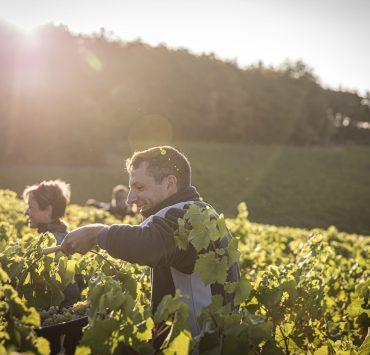 faire les vendanges,vignoble,expérience, Devenez vendangeur d'un jour : immersion dans le vignoble