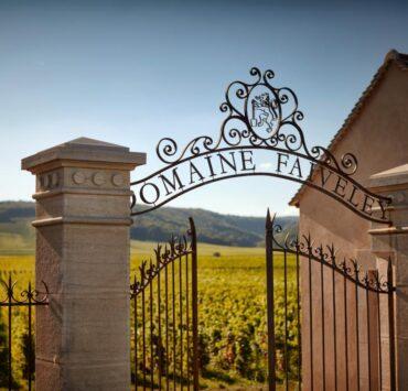 Les vignes du Domaine Faiveley surplombe la route des Grands Crus