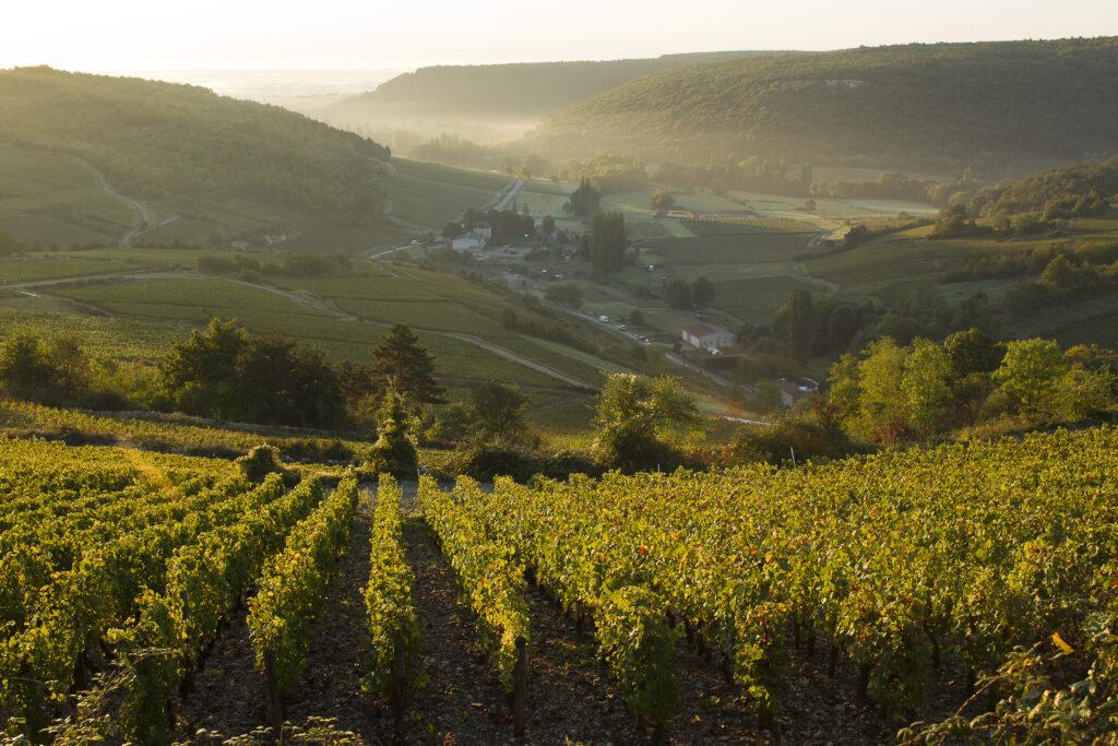 Le vignoble de Bourgogne, l'excellence viticole
