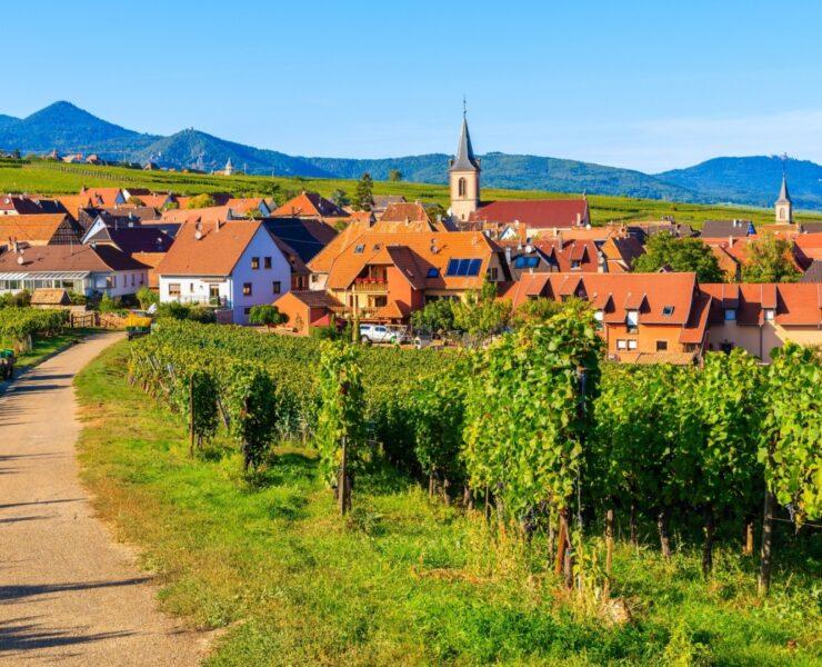 experience viticole, visite domaine viticole, dégustation de vin, experience oenologique - Faire le bon choix pour sa première expérience dans l'œnotourisme - 2021 - 5