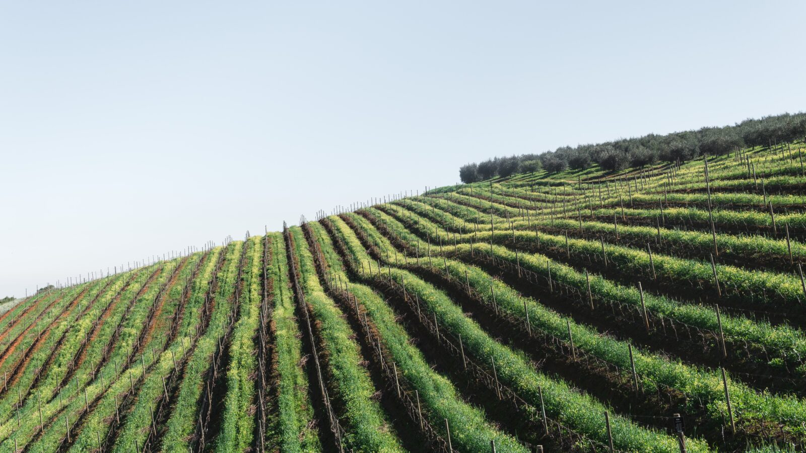- Choisir sa route des vins: planifier son excursion selon ses goûts - 2021 - 15