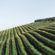 - Choisir sa route des vins: planifier son excursion selon ses goûts - 2021 - 3