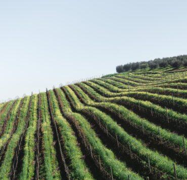 - Choisir sa route des vins: planifier son excursion selon ses goûts - 2021 - 19