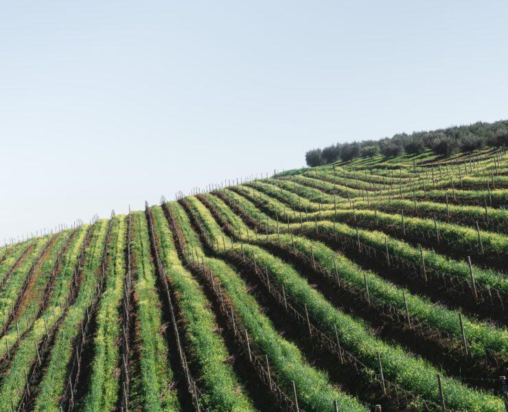 experience viticole, visite domaine viticole, dégustation de vin, experience oenologique - Choisir sa route des vins: planifier son excursion selon ses goûts - 2021 - 1
