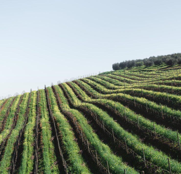 vente des hospices de beaune - Choisir sa route des vins: planifier son excursion selon ses goûts - 2021 - 11