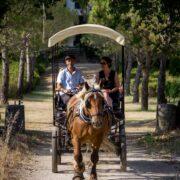 label viticole - Top 5 des expériences œnologiques insolites en Provence - 2021 - 4