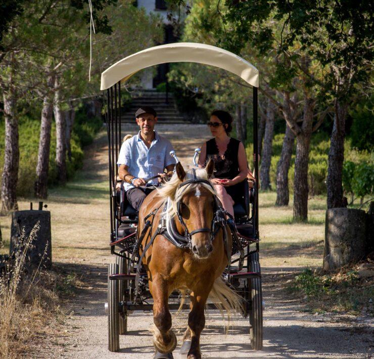 label viticole - Top 5 des expériences œnologiques insolites en Provence - 2021 - 16